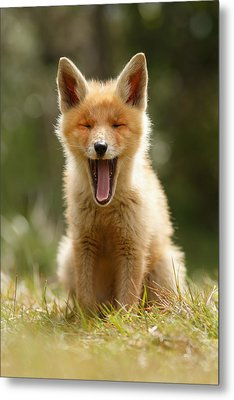 The Yawning Fox Kit Metal Print by Roeselien Raimond
