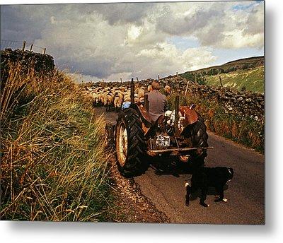 The Yorkshire Shepherd Metal Print