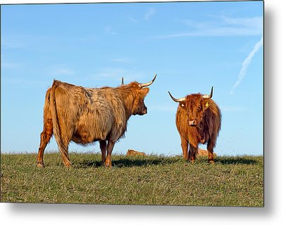 There Can Be Only One Highland Cow Metal Print