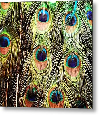 Peacock Feathers Metal Print by Blenda Studio