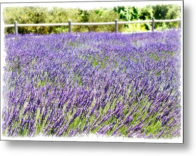 Metal Print featuring the photograph There's Flowers For You by Ryan Weddle