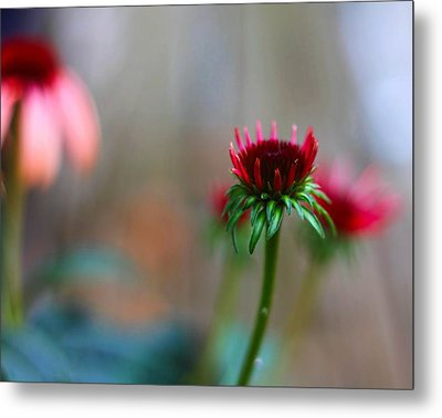 These Dreams Metal Print by Katherine White