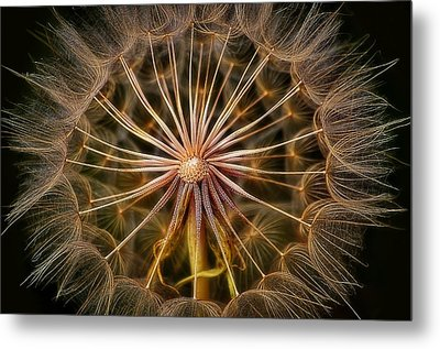 These Pods Light Up Just Dandy. Metal Print