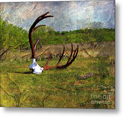They Grow Them Big In Texas Metal Print by Linda Cox