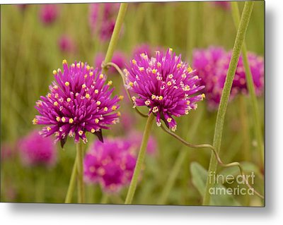 Metal Print featuring the photograph Tangled Up In Pink by Alice Mainville
