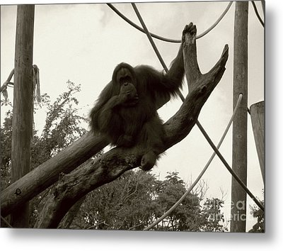 Metal Print featuring the photograph Thinking Of You Sepia by Joseph Baril