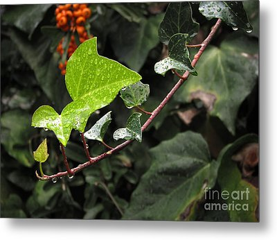Metal Print featuring the photograph Thirsty by Ellen Cotton