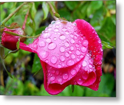 Thirsty Rose Metal Print
