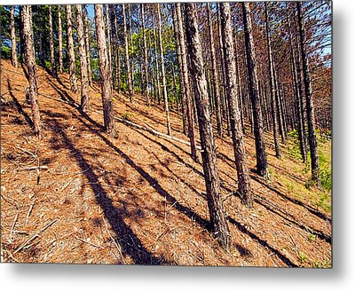 This Is A Steep Hill For Old Legs Metal Print by Constantine Gregory