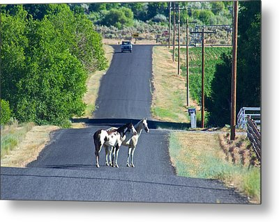 Metal Print featuring the photograph This Is Idaho Baby Tuttle Idaho by Michael Rogers