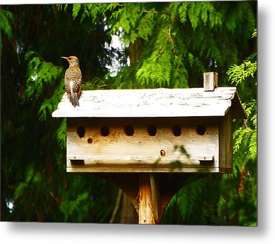 This Place Is Too Crowded Metal Print by Kym Backland