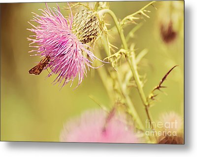 Thistle And Friend Metal Print by Lois Bryan