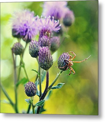 Thistle And Spinner Metal Print by Gynt