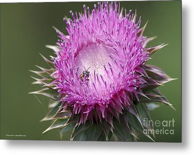 Thistle And The Bee Metal Print by Tannis  Baldwin