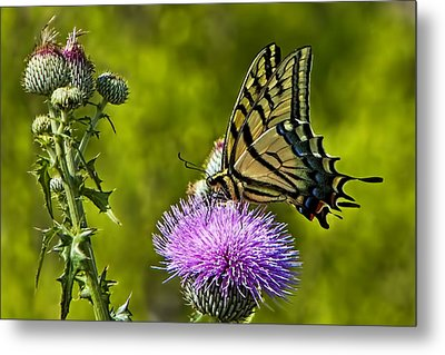 Metal Print featuring the photograph Thistle Do Just Fine by Gary Holmes