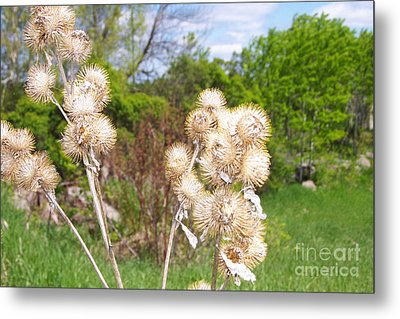 Thistle Me This Metal Print
