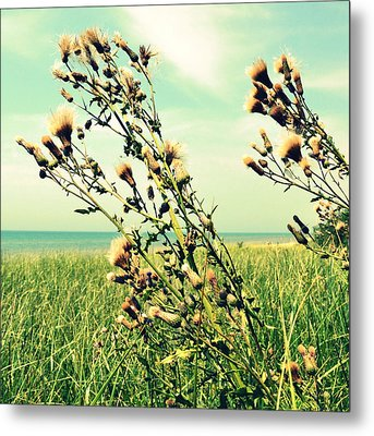 Thistle On The Beach  Metal Print by Michelle Calkins
