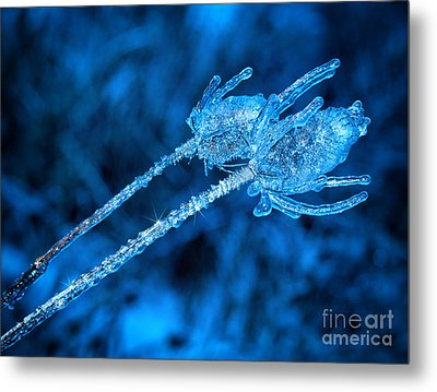 Thistle Plant On Icy Night Metal Print