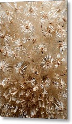 Thistle Seed Head Metal Print by E B Schmidt