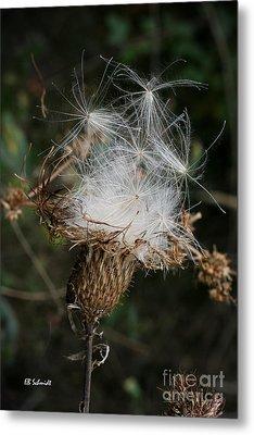 Thistle Seeds Metal Print by E B Schmidt