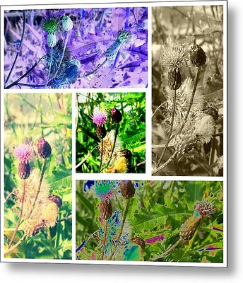 Metal Print featuring the photograph Thistle Study by Thomasina Durkay