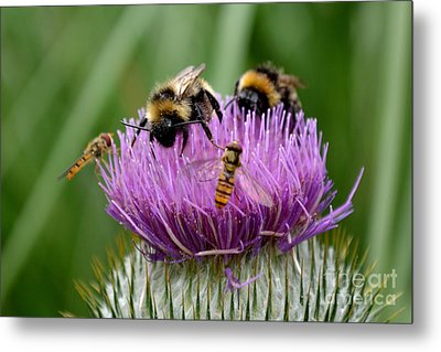 Thistle Wars Metal Print by Scott Lyons