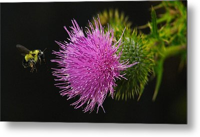 Thistle While You Work Metal Print