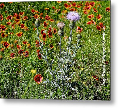 Thistle Bee Wildflowers Metal Print by ARTography by Pamela Smale Williams