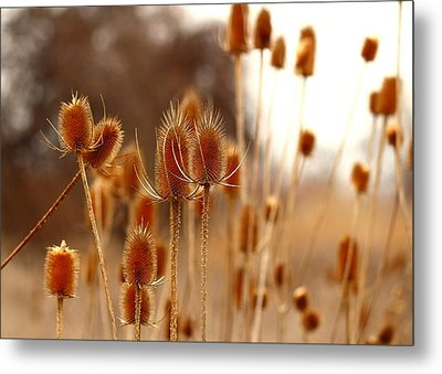 Metal Print featuring the photograph Thistles by Lynn Hopwood