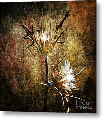 Thorns Metal Print by Stelios Kleanthous