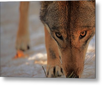 Those Eyes Metal Print by Karol Livote