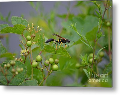 Metal Print featuring the photograph Thread-waist Wasp by James Petersen