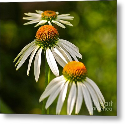 Three Amigos Metal Print by Eve Spring