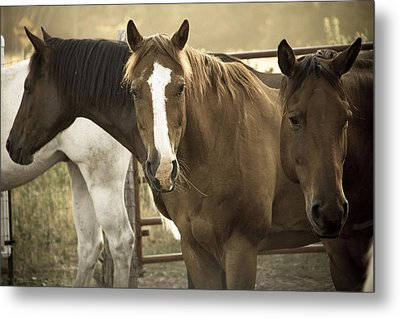 Metal Print featuring the photograph Three Amigos by Steven Bateson