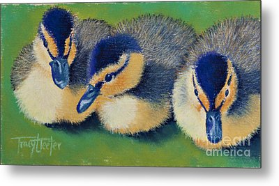 Three Amigos Metal Print by Tracy L Teeter