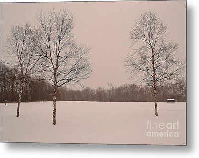 Three Birch Trees In Winter Metal Print
