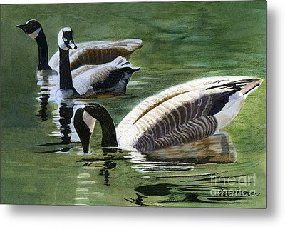 Three Canada Geese Metal Print by Sharon Freeman
