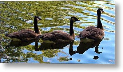 Three Canadian Geese Metal Print by Deborah Fay