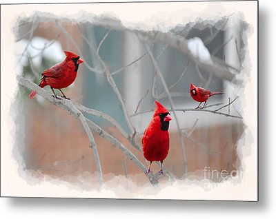 Three Cardinals In A Tree Metal Print by Dan Friend