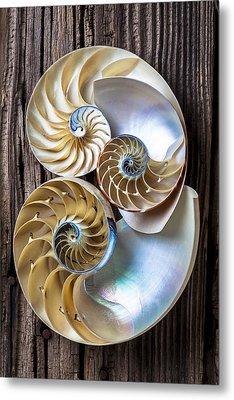 Three Chambered Nautilus Metal Print