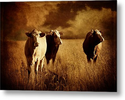 Three Cows Metal Print by Heike Hultsch