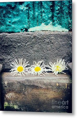 Metal Print featuring the photograph Three Daisies Stuck In A Door by Silvia Ganora