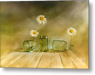Three Daisies Metal Print by Veikko Suikkanen