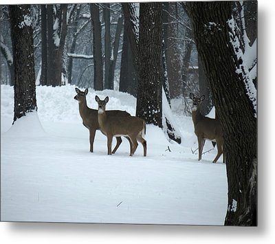 Metal Print featuring the photograph Three Deer In Park by Eric Switzer