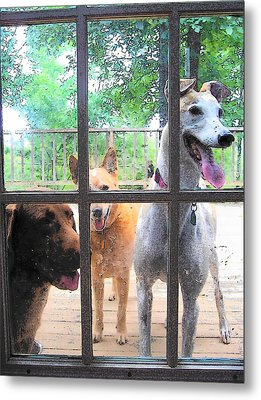 Three Dogs At The Door Metal Print by Strangefire Art       Scylla Liscombe