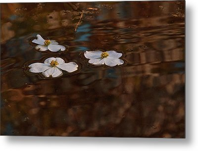 Metal Print featuring the photograph Three Dogwood Blooms In A Pond  by John Harding