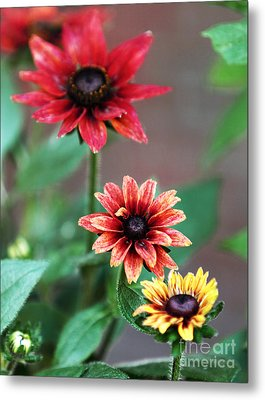 Three Flowers Metal Print by John Rizzuto