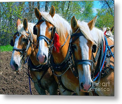 Metal Print featuring the photograph Three Horses Break Time  by Tom Jelen