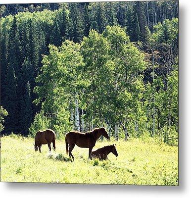 Three Horses Metal Print by Gerry Bates
