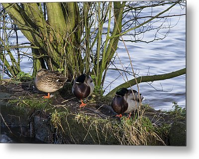 Three In A Row Metal Print by Spikey Mouse Photography